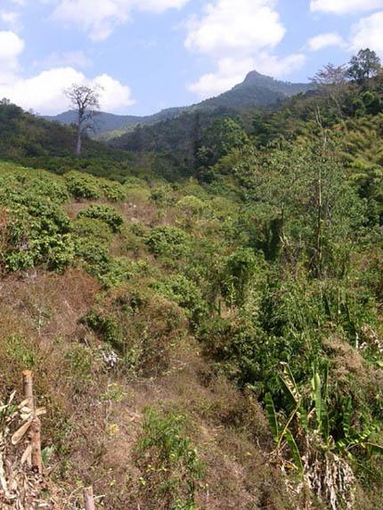 Dzungla u barmskych hranic
