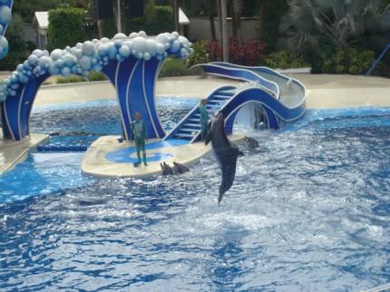 Delfinia show