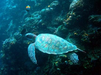 veronika_day3_turtle